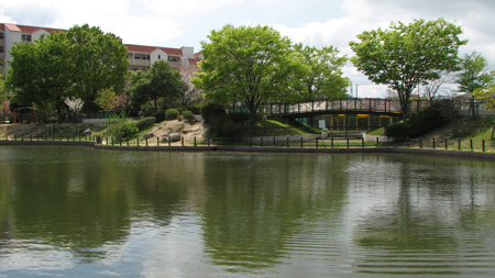 プールもある樋之池公園(北夙川公園)