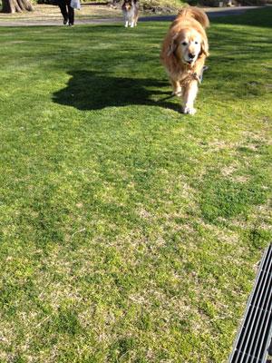 六湛寺公園の芝生