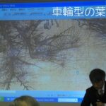 中国絵画の樹木表現とその意味について