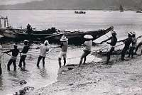 中津浜の鰯漁(昭和37年)江戸時代から鰯漁が盛んで、獲った鰯は浜で天日干しにされた。「宮じゃこ」は西宮の名物だった。