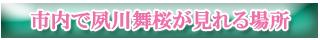 市内で夙川舞桜が見れる場所