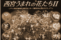 【終了】「西宮うまれの花たちⅡ」切手シートプレゼント