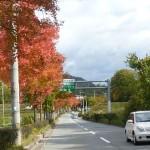 山口町の秋