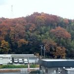 里山の黄葉