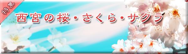 桜特集 西宮の桜・さくら・サクラ