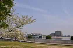甲子園浜海浜公園(沖地区)