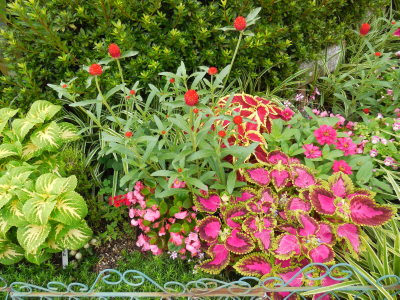 霞町フラワーボックスの夏の花