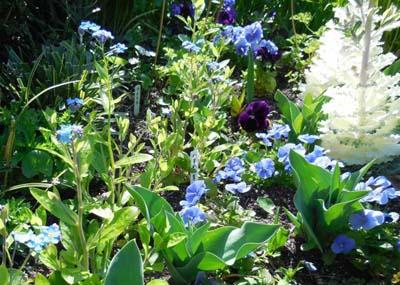 霞町ポケットパークの春の花