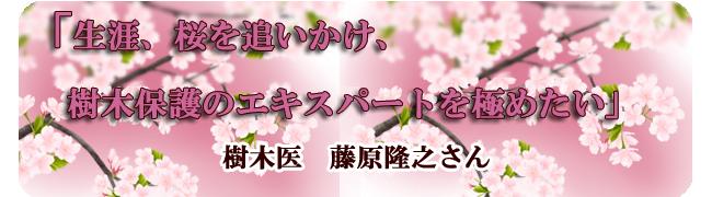 樹木医 藤原隆之さんインタビュー「生涯、桜を追いかけ、樹木保護のエキスパートを極めたい」