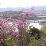 丸山から見た金仙寺湖