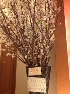 啓翁桜<啓子さんって、呼んでね!!>