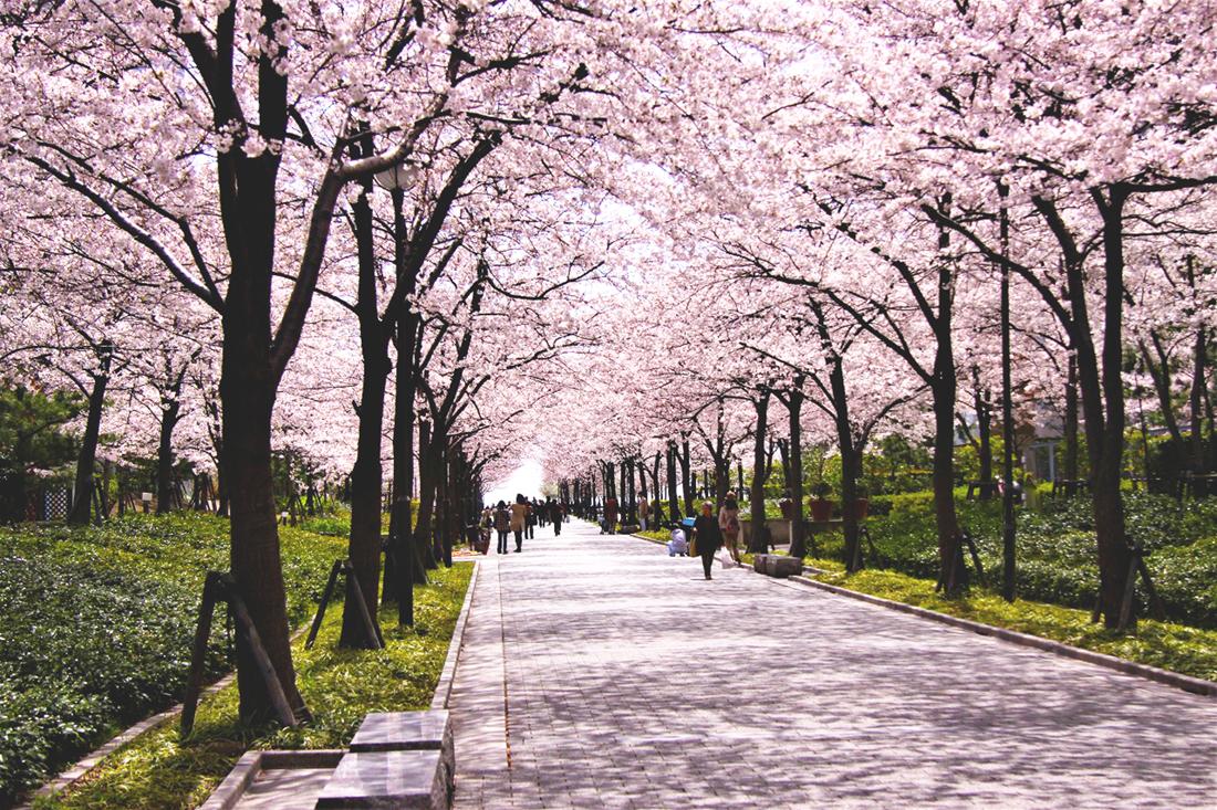 西宮浜 桜