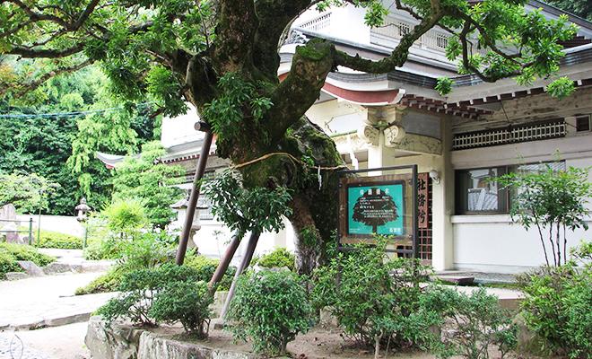 公智神社のヤマモモの木