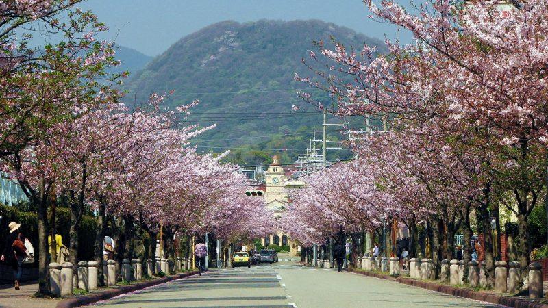 桜 学園花通り
