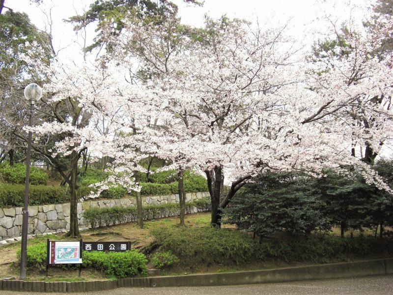 桜 西田公園