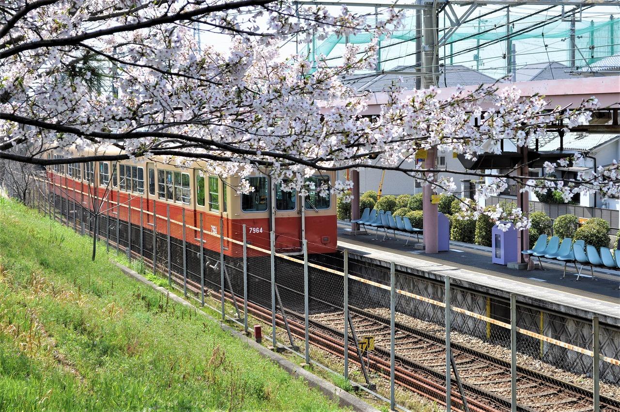 桜 阪神武庫川線