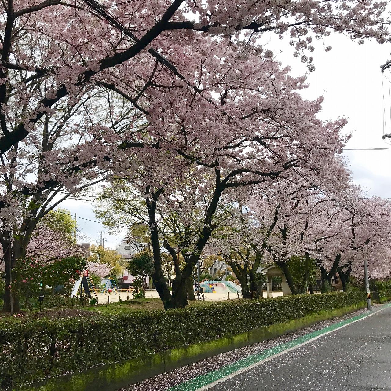 桜  弁天公園