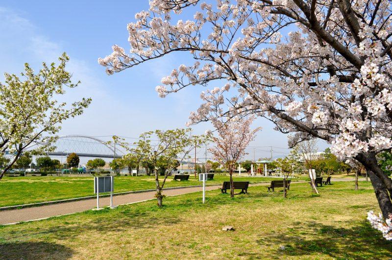 桜 甲子園浜今津地区