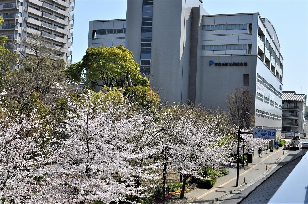 桜 六湛寺公園