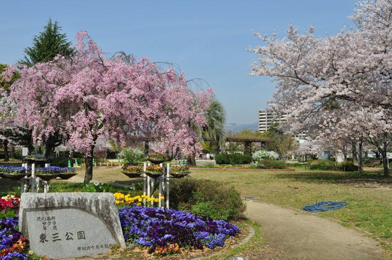桜 東三公園