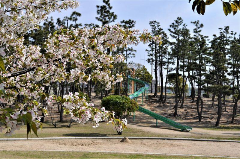 桜 甲子園浜臨海公園