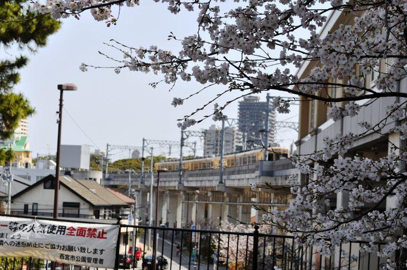 桜 香櫨園駅