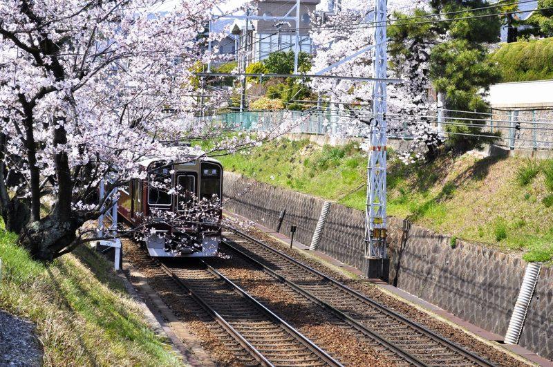 桜 桜 阪急