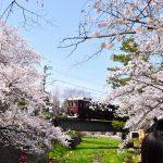 西宮のさくら<夙川公園>