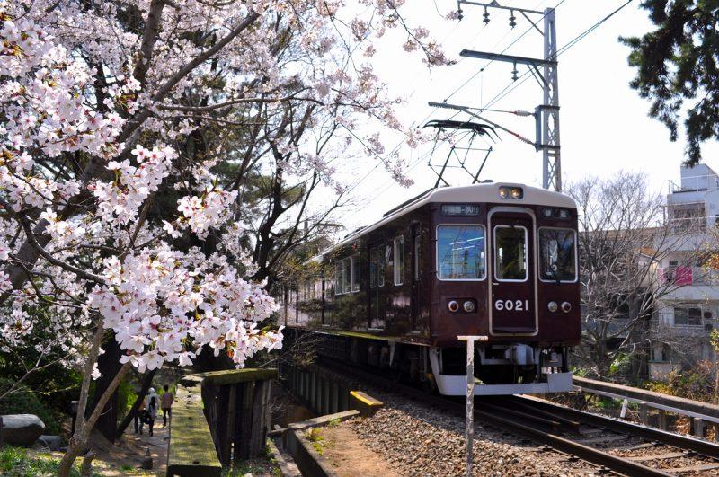 桜 夙川 阪急甲陽線
