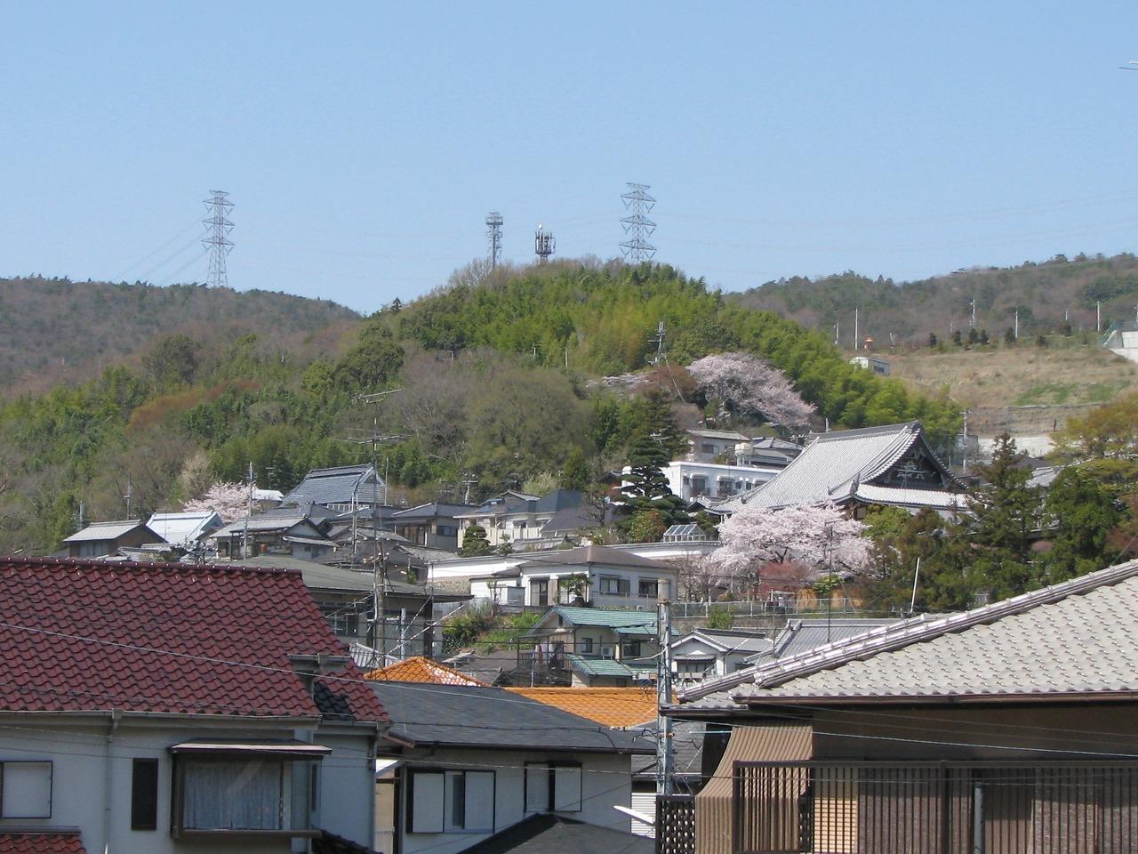 桜 名塩教行寺の遠望