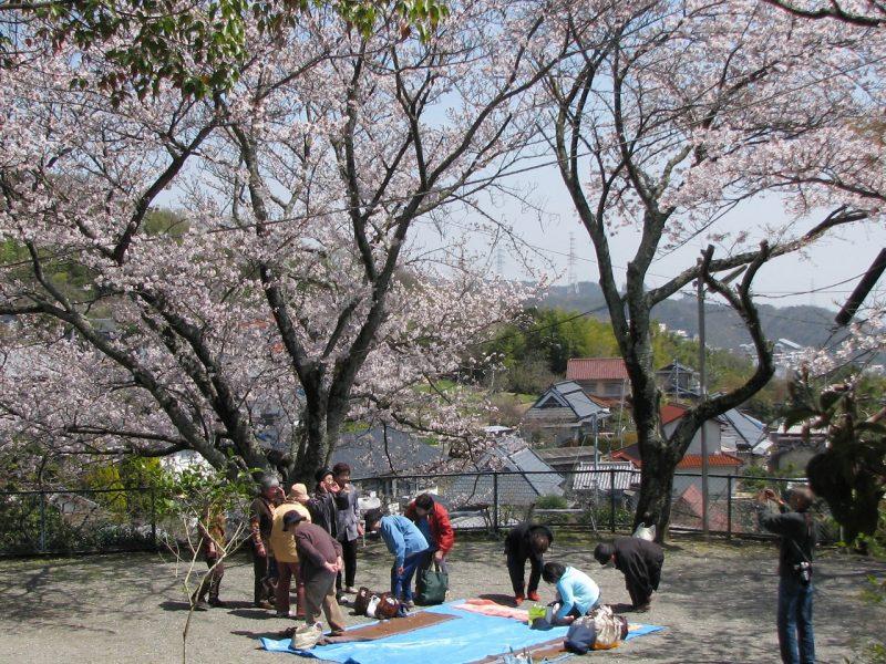桜 教行寺の上の公園