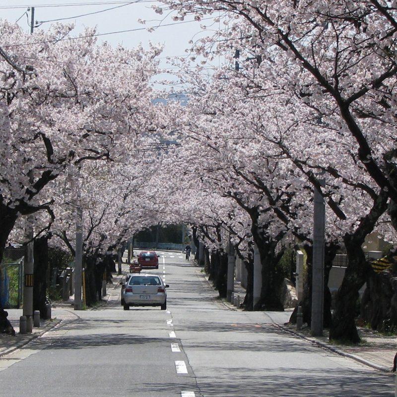 桜 越木岩神社南
