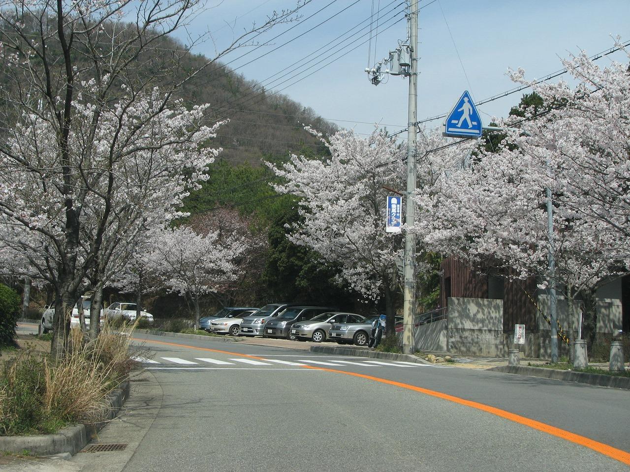 桜 甲山森林公園