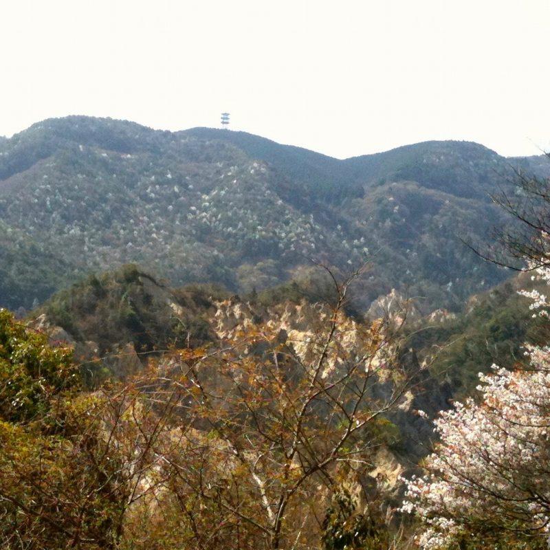 蓬莱峡の山桜