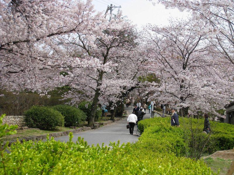桜 越水浄水場