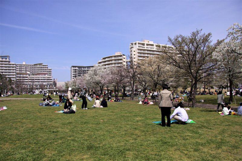 桜 桜 西宮浜