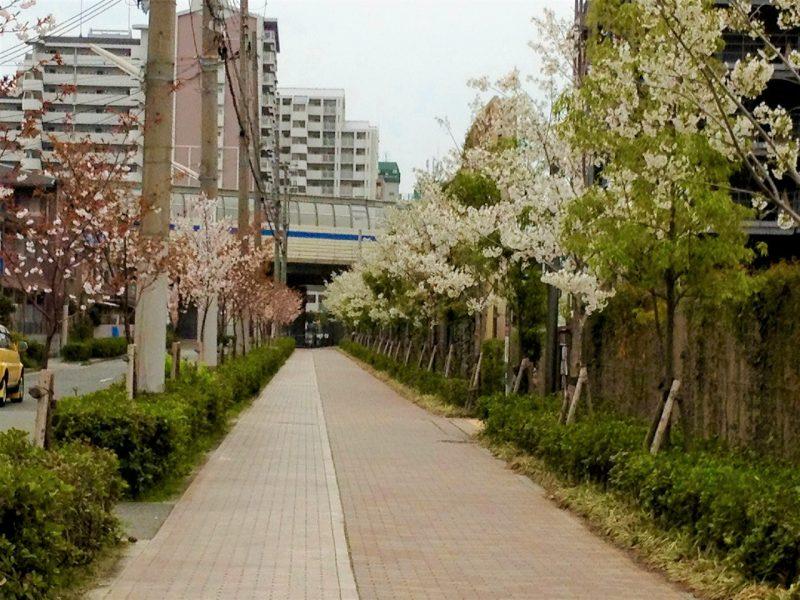 桜 ガーデンズ