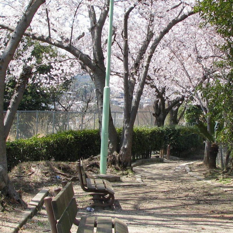 桜 毘沙門公園