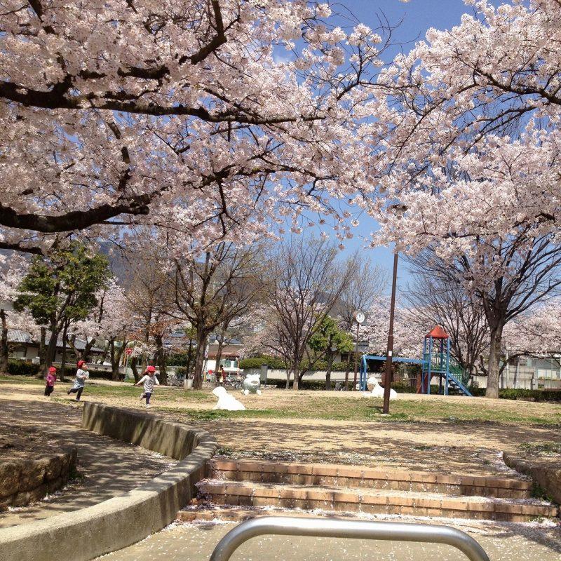 桜 松ヶ丘公園