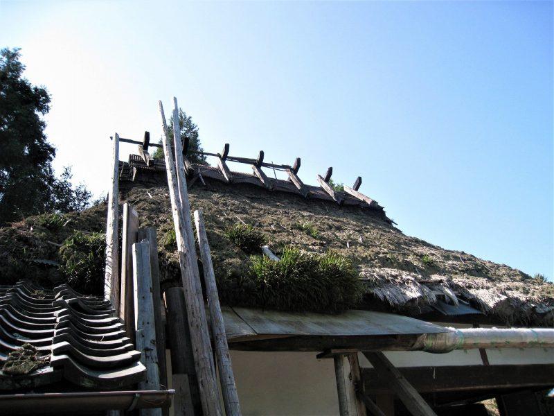 船坂 古民家 小麦を作ってかやぶき屋根を修復