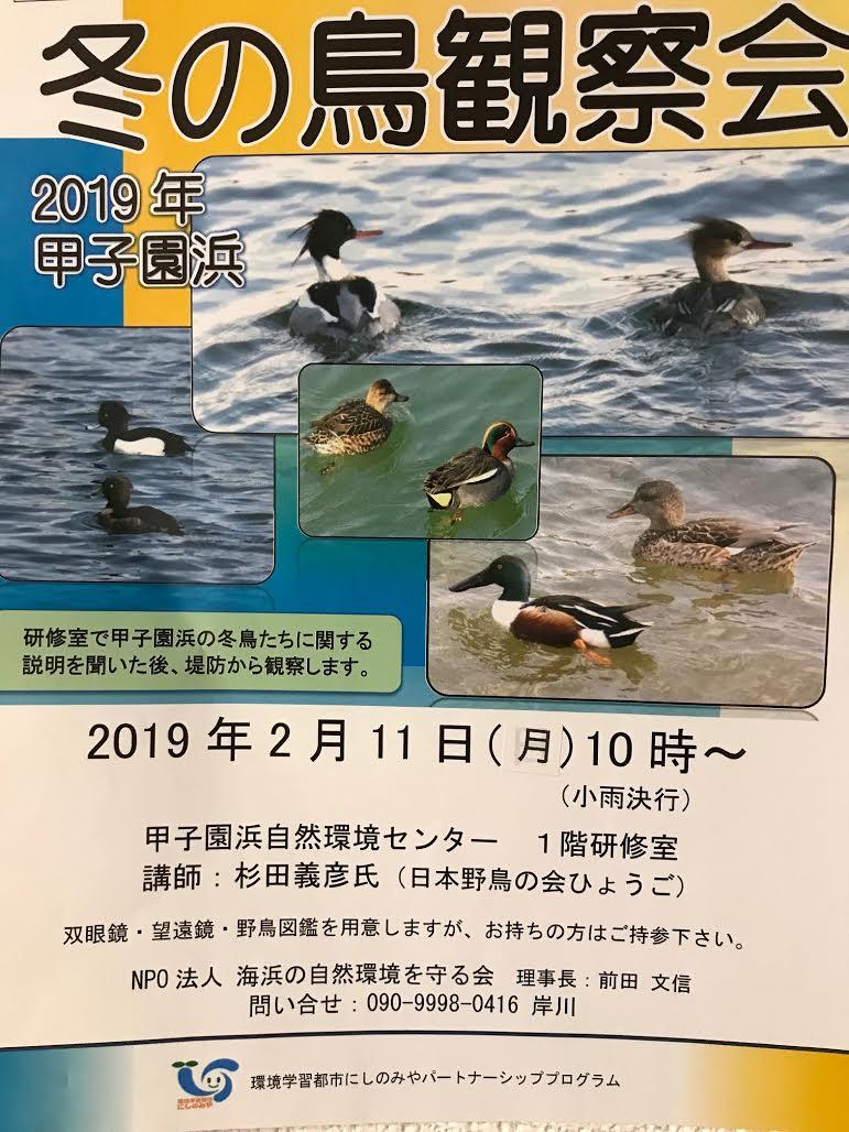 甲子園浜野鳥観察
