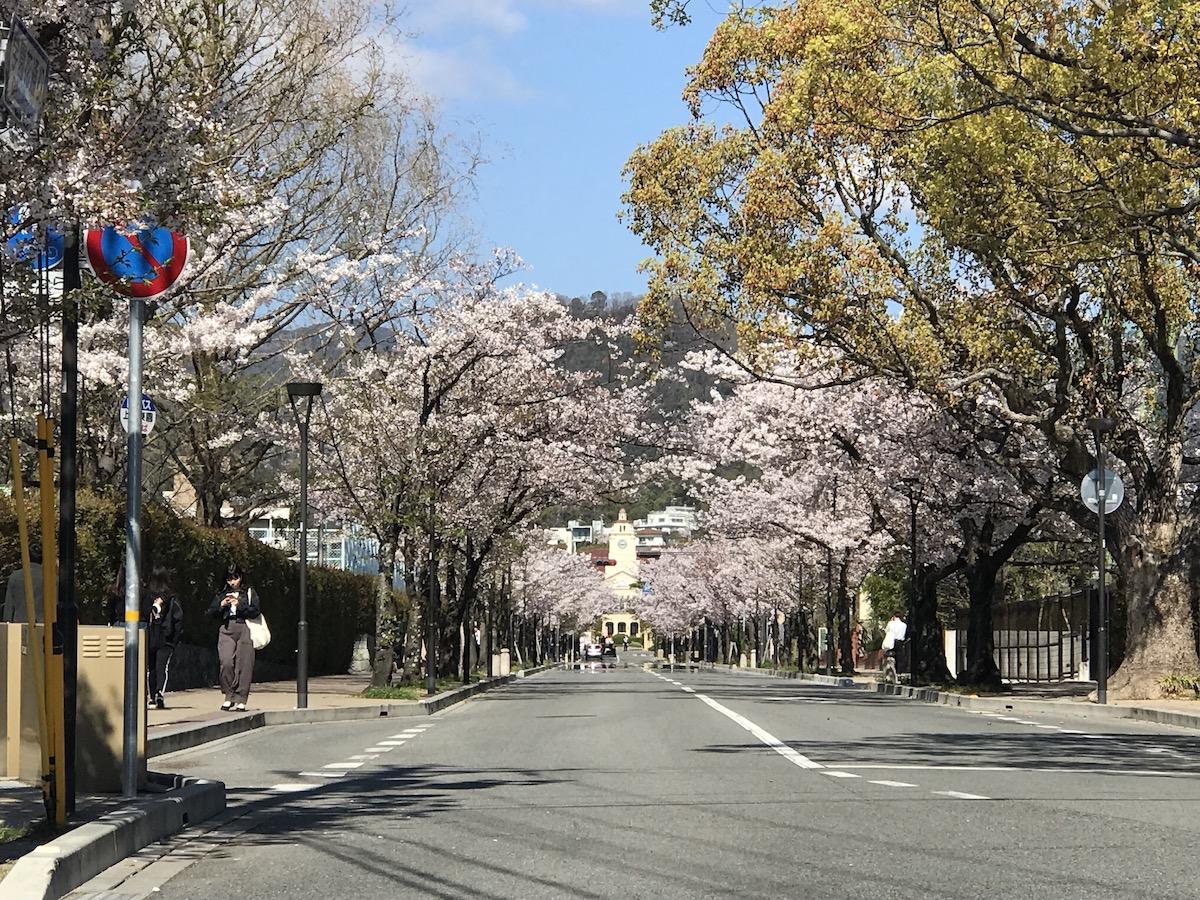 学園花通り 2019