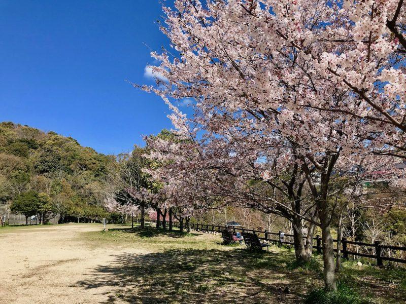 芝桜 地すべり資料館