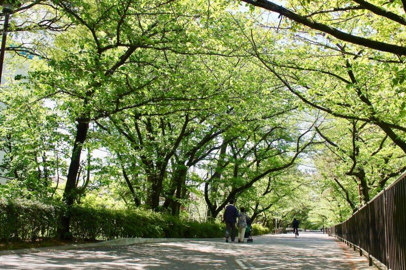 夙川 緑のトンネル