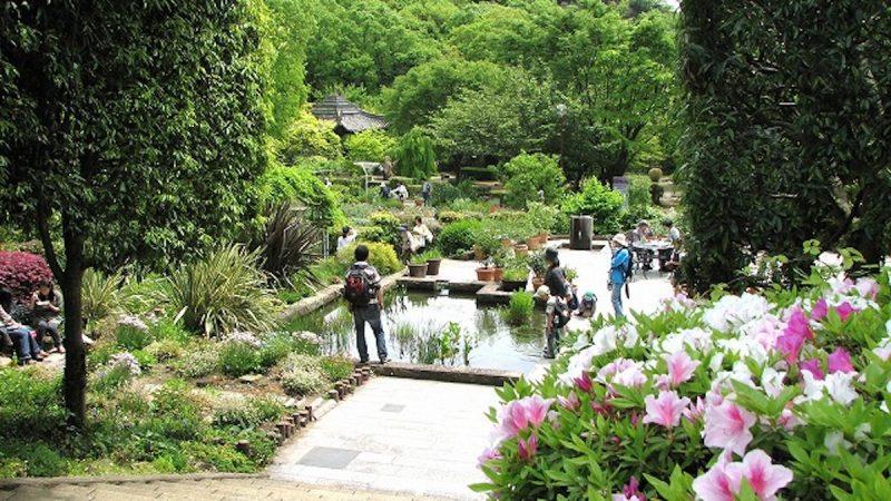 北山緑化植物園2