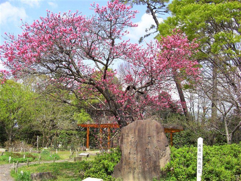 令和にゆかりの万葉公園(西田公園)