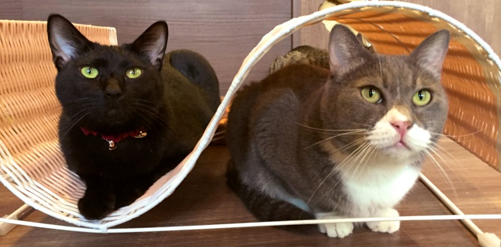 保護猫カフェ ラゾーニャ