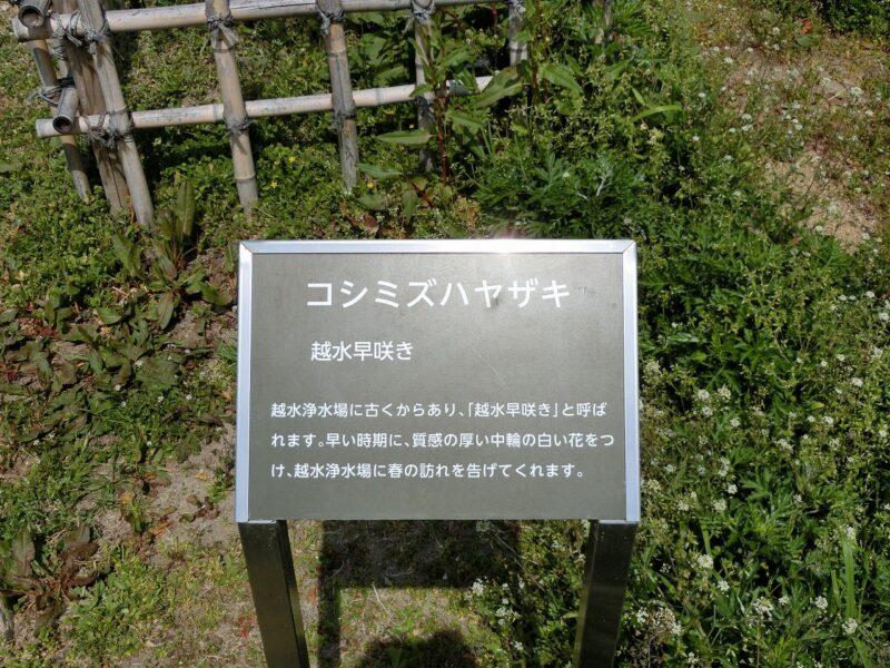 越水浄水場 コシミズハヤザキ