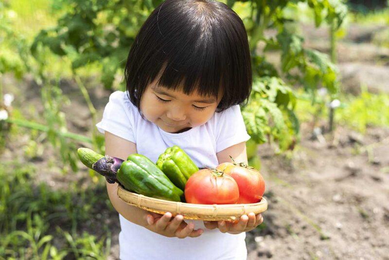 市民農園で野菜の収穫